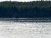 juneau-2009-westerdam-alaska-130-2