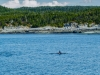 juneau-2009-westerdam-alaska-054-2