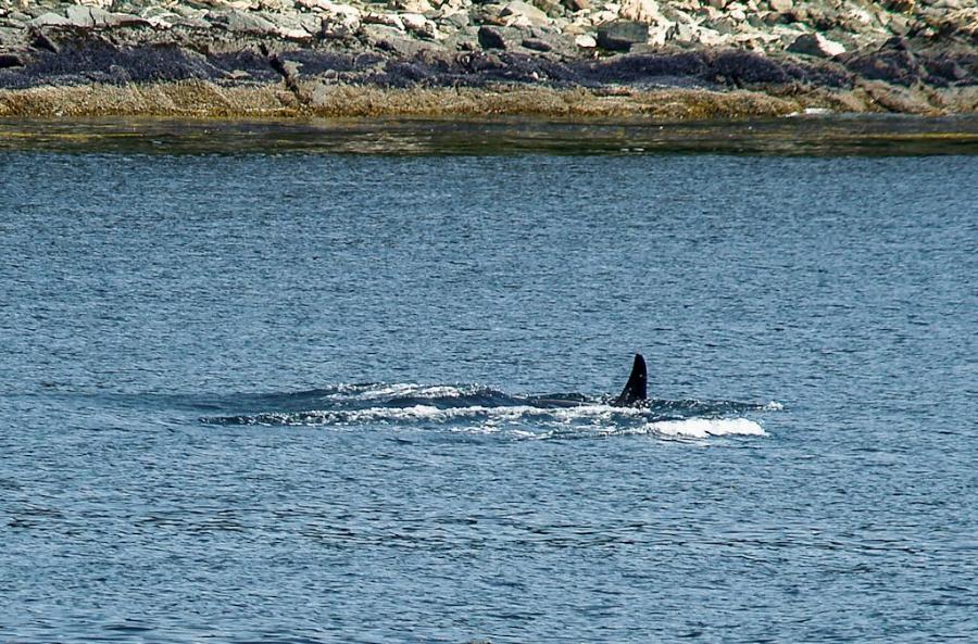 juneau-2009-westerdam-alaska-077-2