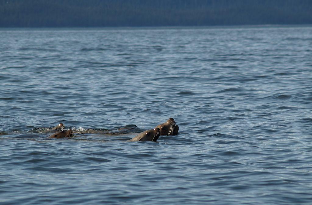 Sea Lions page