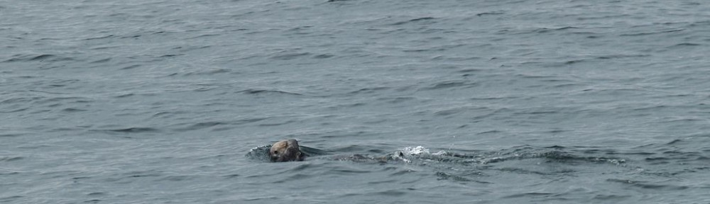 Sea otters page