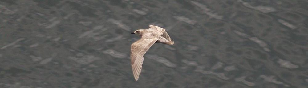 Shore bird page